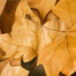 Психология саморазвития – Основные понятия для духовного развития